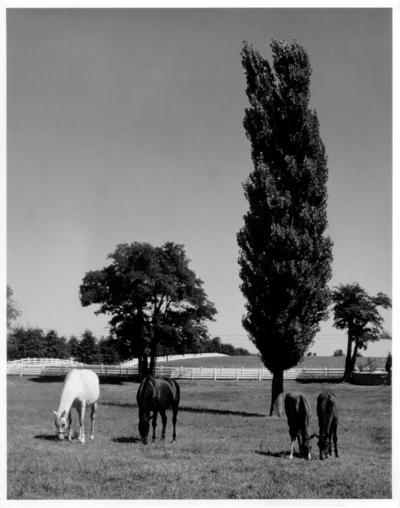 Four horses in pasture
