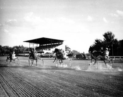 Horses on trotting track: