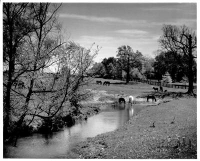 Horses, creek and pasture