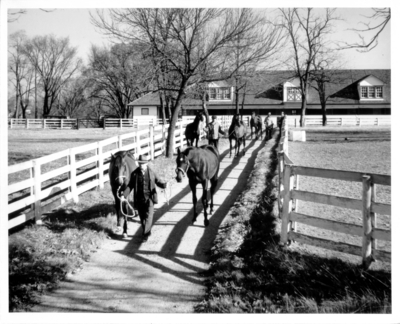 Horses being led to a track