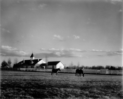 Horses with stables in background