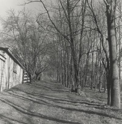 Path beside the pony barn; Boot Hill Farm; Gen Barnhart