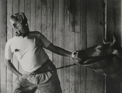 John Jacob Niles struggling with a recalcitrant Jersey cow; Boot Hill Farm; Van Coke