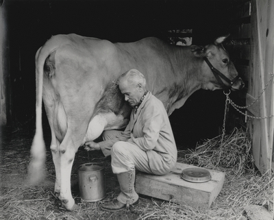 John Jacob Niles milking a cow at Boot Hill Farm; Van Coke