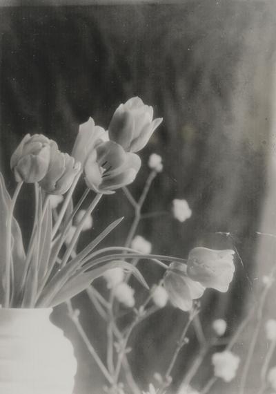 Tulips; John Jacob Niles