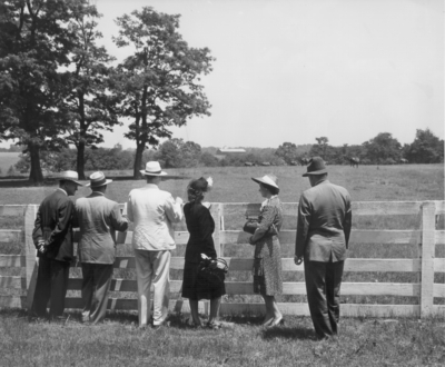 Four men and two women looking over a fence at horses in a pasture
