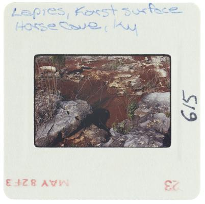 Lapies, Karst surface Horse Cave, Kentucky
