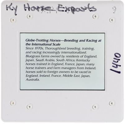 Kentucky Horse Exports