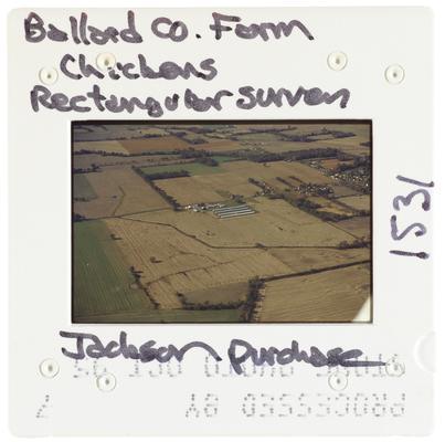 Ballard County Farm Chickens Rectangular Survey - Jackson Purchase