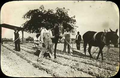 Unidentified African American men working in the field and leading plow horses