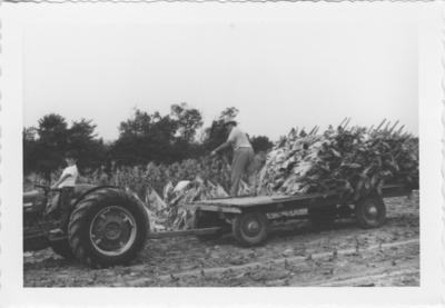 Loading tobacco, Boone Co