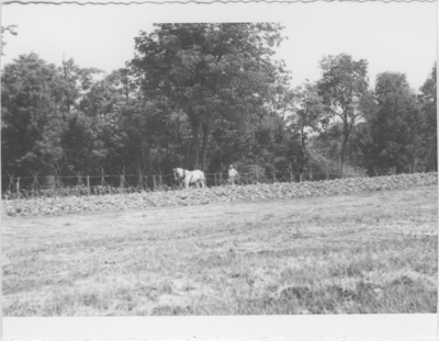 Series S-[?]-S32: Bullitt Co., man working tobacco field with horse