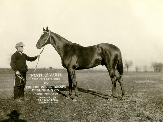 Man 'O War Copyright 1921 by The Thorobred Record Publishing Co. incorporated; Photograph by McClure Lexington, KY