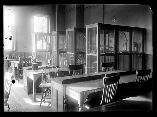 Zoology laboratory, specimens and tables