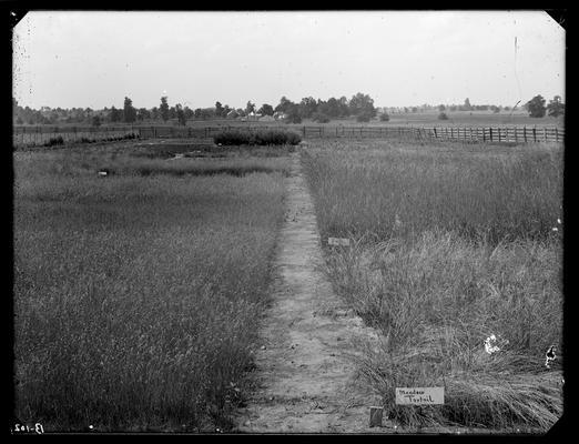 Old grass plots, Experiment Farm