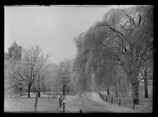 Sleet, trees, entrance drive