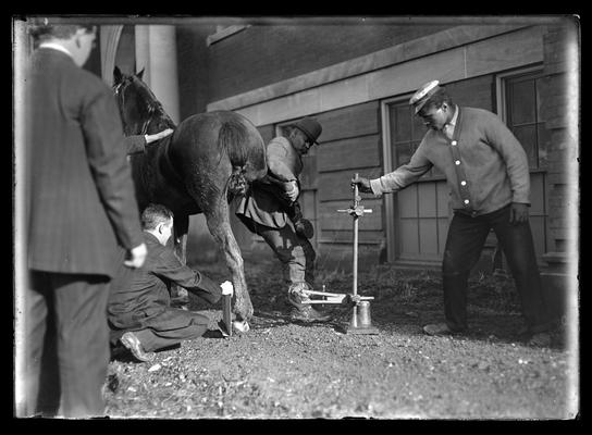 Taking x-ray of horse's foot for Sphar, four men