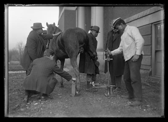 Taking x-ray of horse's foot for Sphar, five men