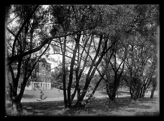 Willows on campus