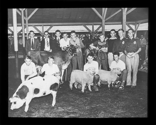 Fayette County Future Farmers of America (F.F.A.) and prize-winning animals at the 1940 Kentucky State Fair