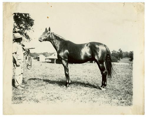 Image of the horse Rocksand used in the Bluegrass Child poster. Handwritten on verso, Rocksand. (Two copies)