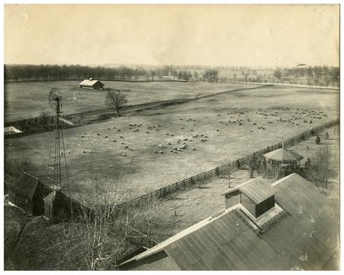 Image of the sheepfold used in the Bluegrass Child poster. Handwritten on verso, John Madden's Sheepfold. (Three copies)