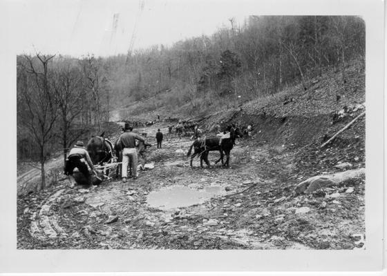 WPA workers grading road with horse teams