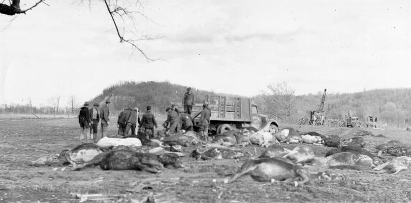 1937 Flood. Disposal of dead animals. WPA workers hauling away dead horses, cows, pigs and dogs, drowned just south of Louisville, KY. View photographed February 10, 1937