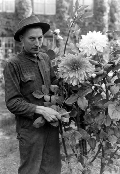 Man with Dahlias