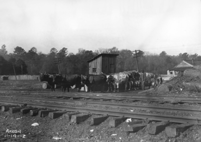 Annual inspection, oxen at rails, Akron, Ohio