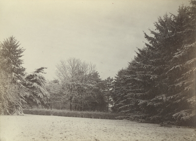 Snow scene taken on the grounds of the Honorable Matthew Johnson in Lexington, Kentucky, March 29, 1883