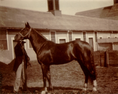 Horse being held by bridle at stable