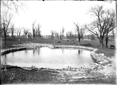 A pond with horses;                          Bryan Station // Pike // Pond view handwritten on envelope