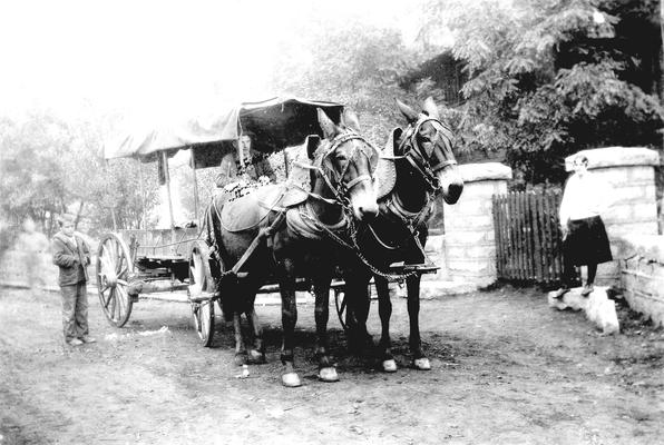 Man driving two mules and wagon