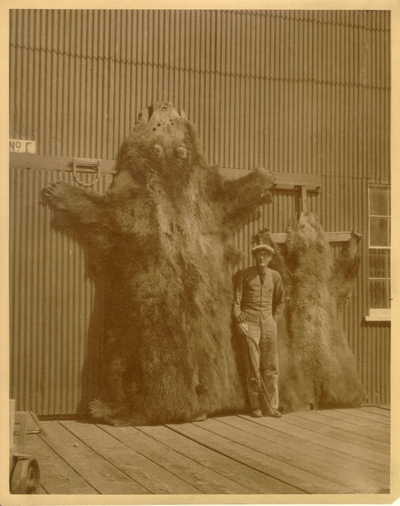 Man with bear skins (on Kodiak Island.) The photograph contains a description on the back. 8x10