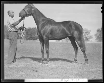Walnut Hall Farm; yearling (horse) held by the reins