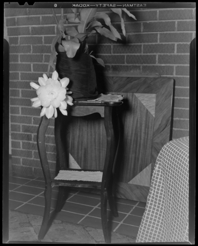 Mrs. Ora P. Taylor; 937 Idlewild Court; interior; flowers                             (plants) on a plant stand