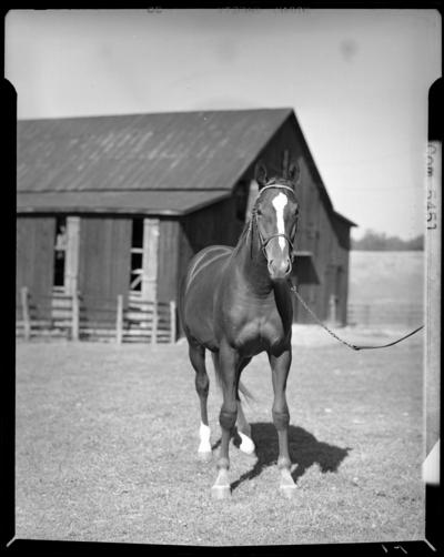 Ward Farm; horse
