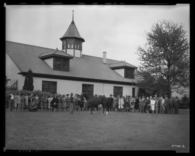 Whirlaway, Calumet Farm; horse being shown outside of                             barn